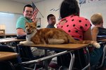 Cuteness Interviews Bubba the School Cat