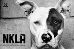 End the Killing of Animals in L.A.!