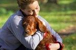 Do Dogs Forgive?