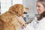 Do Dogs Need Blood Tests Before Taking Heartworm Pills?