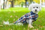 Do Dogs Need Clothing in Cold Weather?