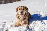 Do Outdoor Dogs Need More Food In Cold Weather?