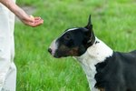 Do Dogs Prefer Food or Attention?