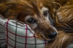Do Dogs Stop Eating In the End of Life Stage?