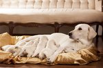 Do Mother Dogs Lose Weight After Weaning?