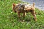 Do Neutered Dogs Still Lift Their Legs to Pee?