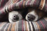 Do Some Dogs Need More Sleep Than Others?