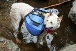 Dog Backpacks as Training Tools