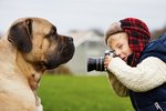 7 Dog Photography Tips