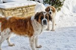 Dogs Suited to Colder Climates