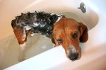 Giving Dogs a Bath at Home
