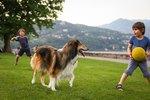 10 Best Herding Dogs For Families