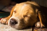 How to Calm Your New Puppy at Night