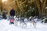 How Are Sled Dogs Cared For?