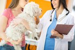 How Does Spaying Affect Female Dogs?