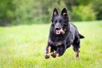 How Much Exercise Should My Dog Get?