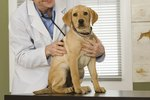 How Often Should a Dog Visit the Vet?
