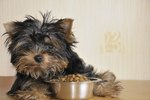 How To Make Dry Dog Food More Appealing