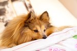 How to Calm a Dog Without Sedatives