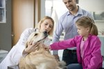 How to Explain Pet Neutering to Kids