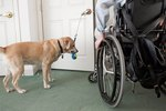 How to Find Service Dogs for the Disabled