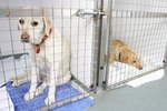 How to Find the Right Dog Boarding Facility