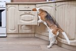 How to Keep Dogs Out of The Cabinets