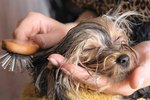 How to Keep Your Dog From Becoming Matted