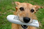How to Stop a Dog From Eating Remote Controls