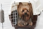 Stop a Dog From Moving His Crate Around