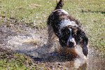 How to Stop a Dog From Tracking Mud Indoors