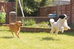 How to Teach Dogs Yard Boundaries
