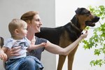 How to Teach Kids to Respect Dogs