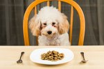 How to Switch to a New Puppy Food