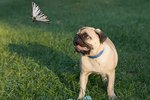Is It Safe for Puppies to Eat Insects?