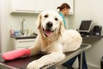 Is Pet Health Insurance Worth It?