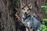 My Dog Eats Tree Bark
