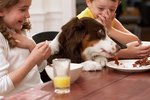 My Dog Steals Food From the Kids