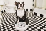 Overeating and Obesity in Dogs