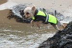 Preparing Your Dog For Water Activities
