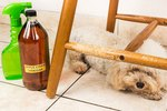 Products To Stop Dogs from Chewing Furniture