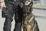 Raising a Puppy To Be a Police Dog