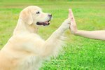 Raising a Trusting, Affectionate & Obedient Dog