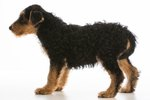 Why Dogs Tuck Their Tails Underneath Them