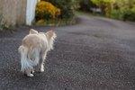 Roaming Behavior In Dogs