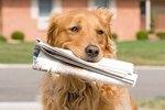 """Should I Give My Dog A """"Job"""" At Home?"""