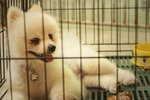 Should You Cover Your Dog's Crate?