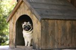 Stop a Dog From Peeing in Their Doghouse
