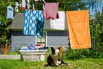 Stop a Dog From Pulling Clothes Off the Line