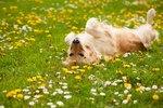 Strange Dog Behaviors